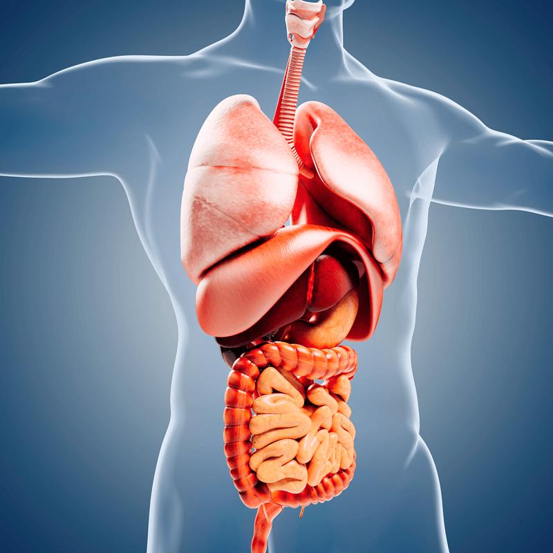 gallbladder gut issues